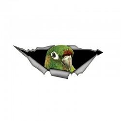 Green 3D parrot - car sticker 15 * 6cm