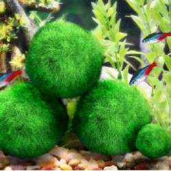 Aquarium mini moss ball - decorative nano plant